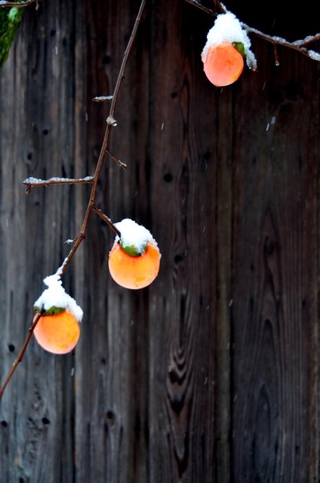 柿に雪-2