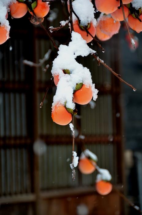 柿に雪-3