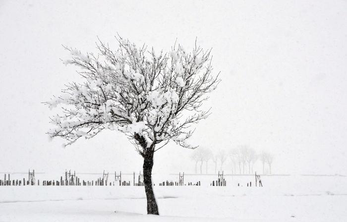雪 木-1