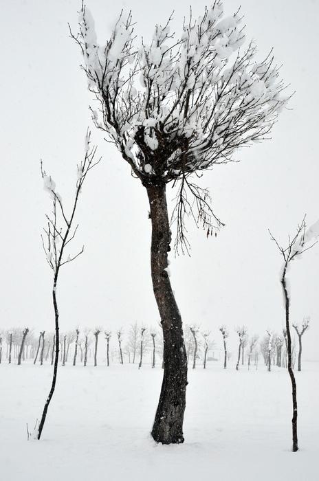 雪 木-2