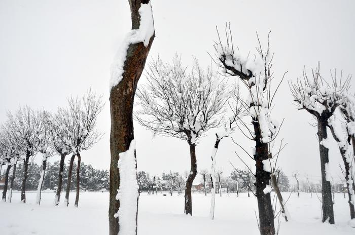 雪 木-3