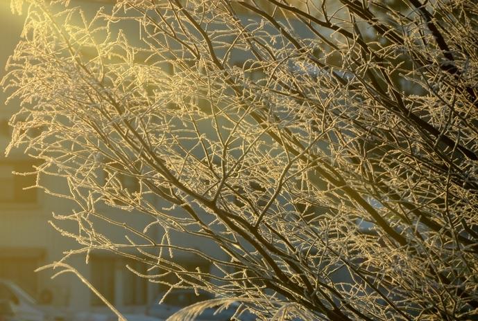 冬の朝-2