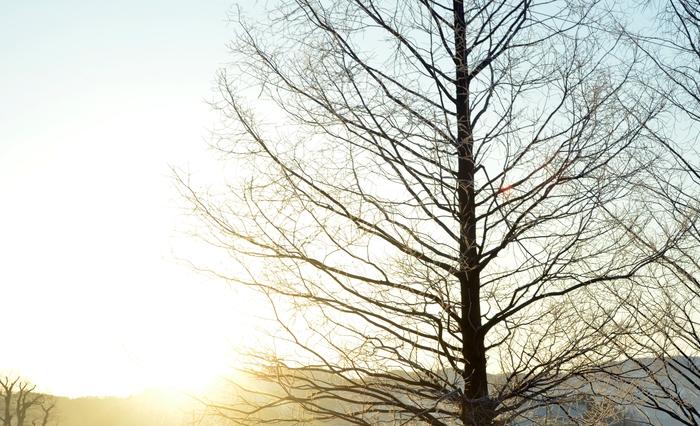 冬の朝-3