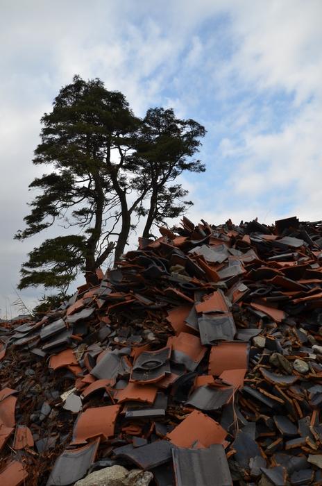 冬枯れの木-1
