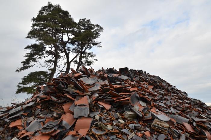 冬枯れの木-2