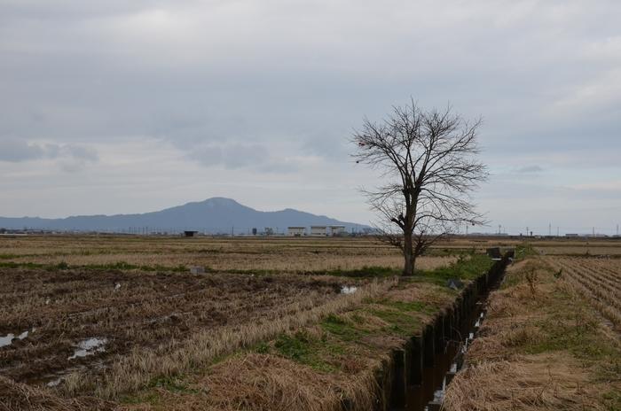 冬枯れの木-4