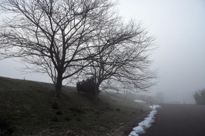 朝霧の木-2