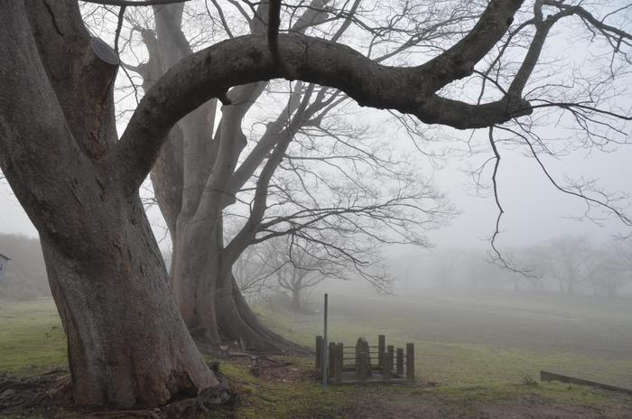 朝霧の木-3