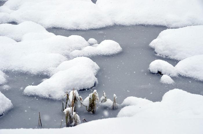 田の雪-1