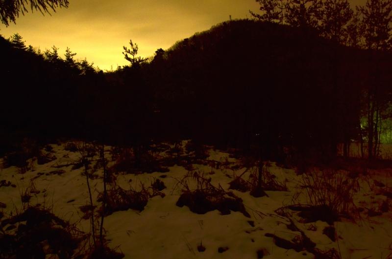 夜の林 雪