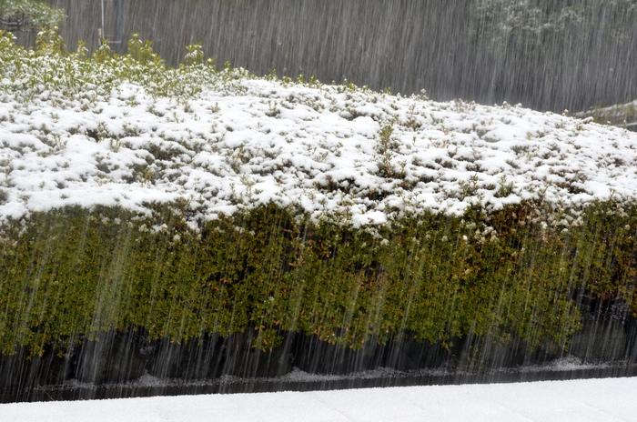 降る雪-2