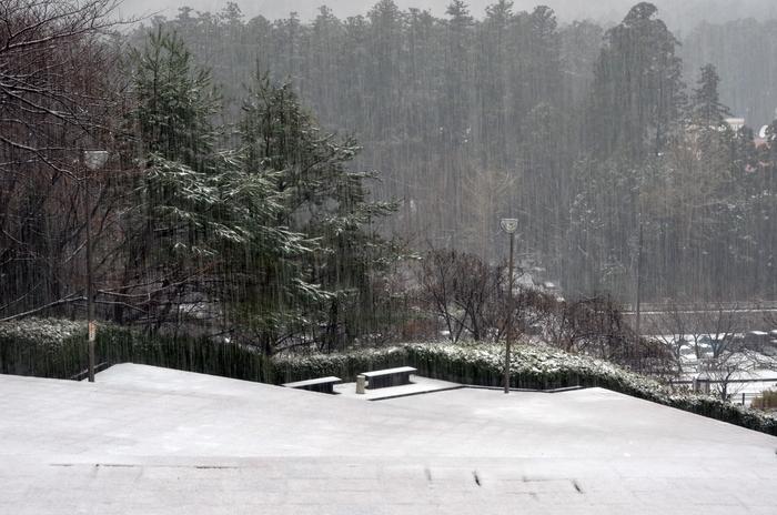 降る雪-3