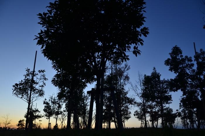夕暮れ時 木々のシルエット-1