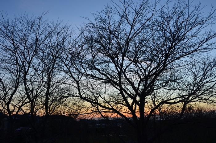 夕暮れ時 木々のシルエット-3