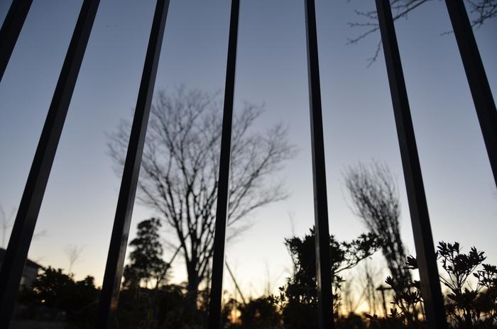 夕暮れ時 木々のシルエット-4