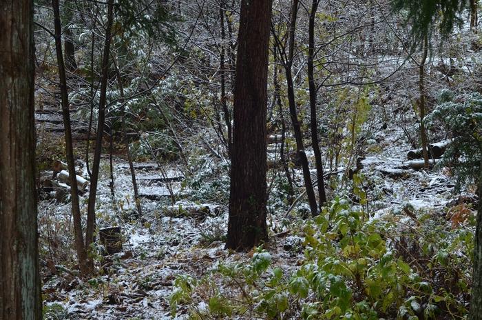 初雪 城山公園-3
