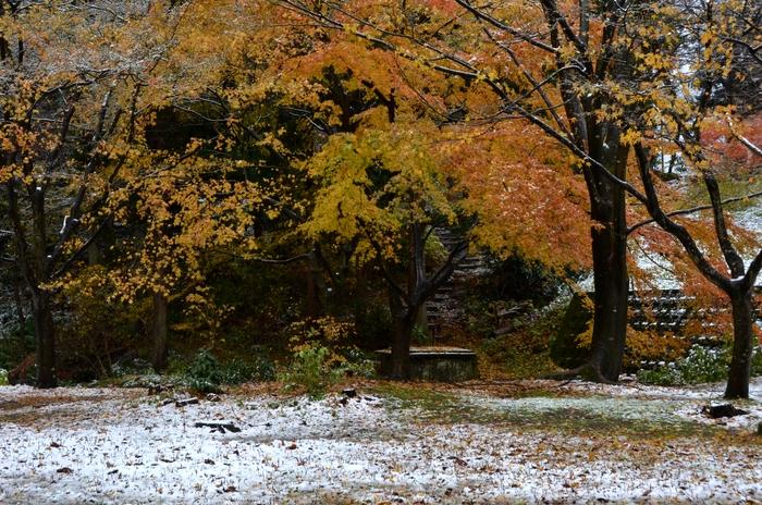 初雪 城山公園-2