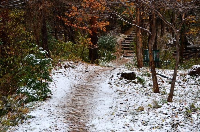 初雪 城山公園-1