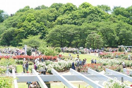 生田バラ苑5