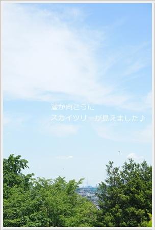生田バラ苑6