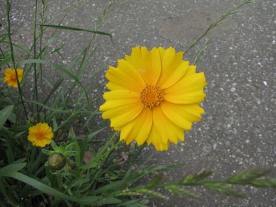 黄色い花の拡大