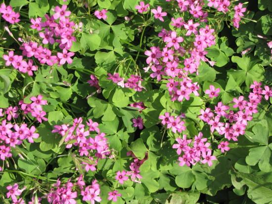 もっと小さい花の群生