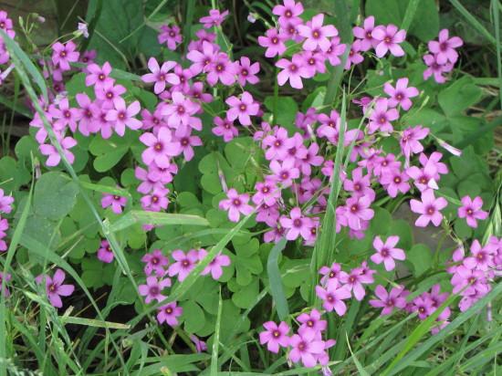 もっと小さい花の群生・2