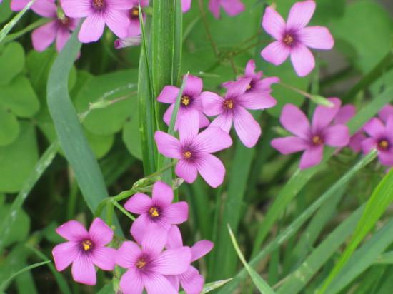 もっと小さい花の拡大
