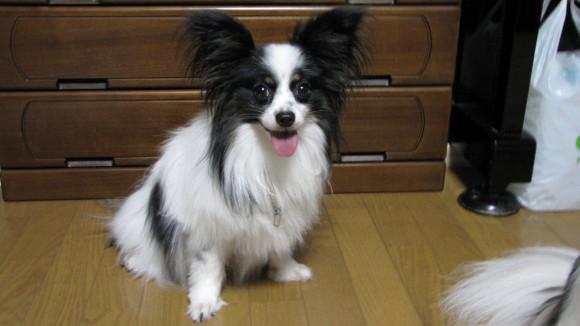 ラヴィの写真2