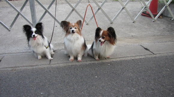 散歩途中で3頭一休み