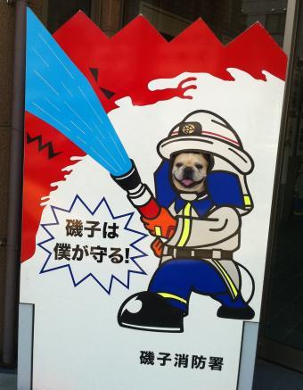 フレンチブルドッグ 消防士さんになる