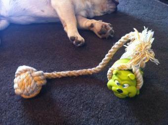 発明おもちゃ