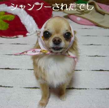blog2012050504.jpg
