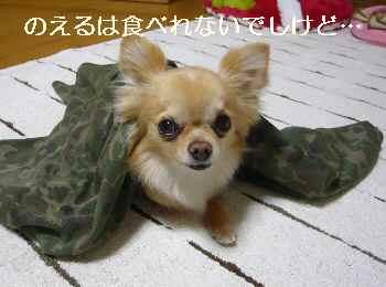blog2012050601.jpg