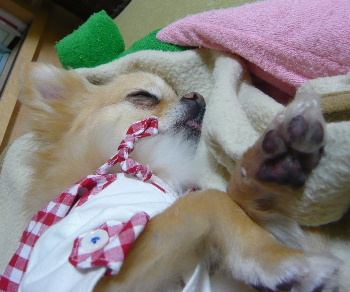 blog2012050804.jpg