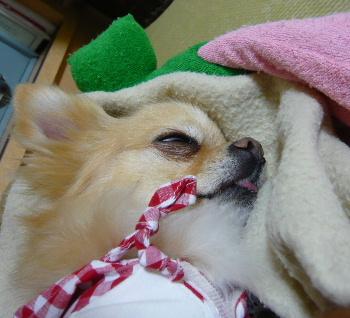 blog2012050805.jpg