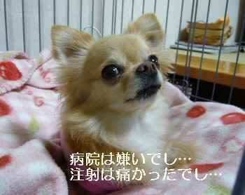 blog2012051103.jpg