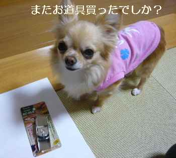 blog2012051301.jpg