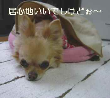 blog2012051506.jpg