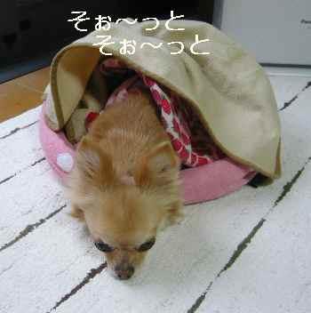 blog2012051507.jpg