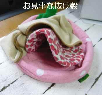 blog2012051508.jpg