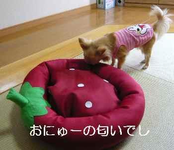 blog2012051602.jpg