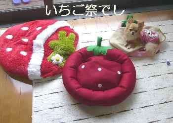 blog2012051603.jpg