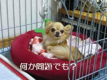 blog2012052205.jpg