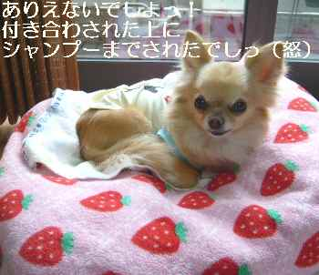 blog2012052502.jpg