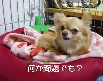 blog2012052704.jpg