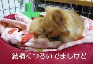 blog2012052705.jpg