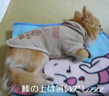 blog2012052803.jpg