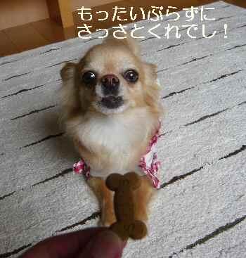 blog2012053105.jpg