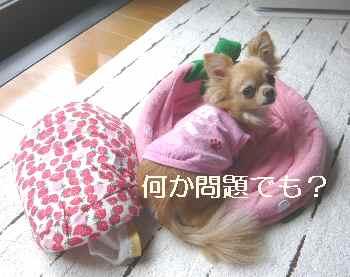 blog2012060501.jpg